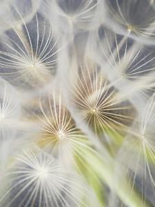Pollen_Kim_color