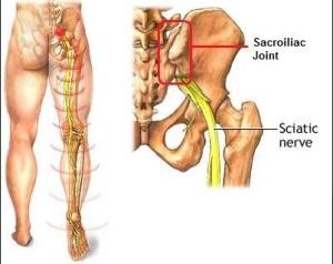 sacro iliac joint